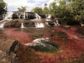 eco-tourists-walk-through-part-of-the-cano-cristales-in-colombias-sierra-de-la-macarena-national-park (1).jpg