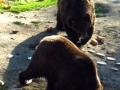 BV_Zoo (15)