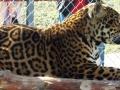BV_Zoo (16)