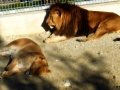BV_Zoo (4)