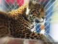 BV_Zoo (8)