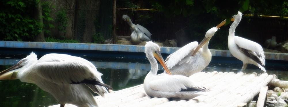 Zoo Ema 9