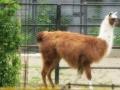 Zoo Ema 11