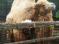 Zoo Ema 2
