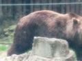 Zoo Ema 4