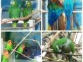 Zoo Ema 5