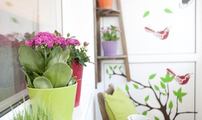 Discuții de zi cu zi. Florile de pe balcon