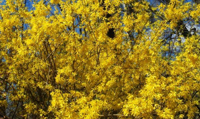 Weekend printre flori. Gradina Botanica din Bucuresti