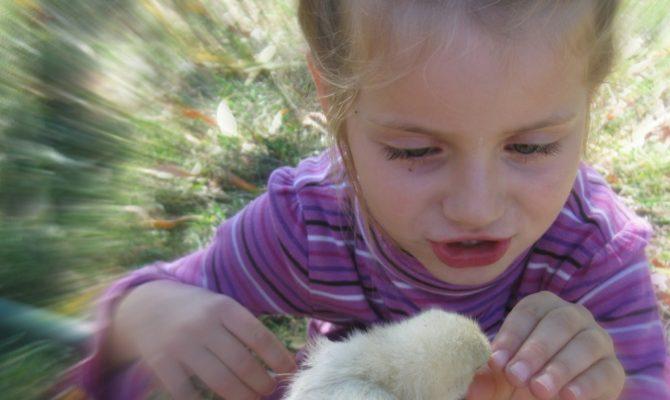 Sa cedam cand copilul vrea animal de companie?