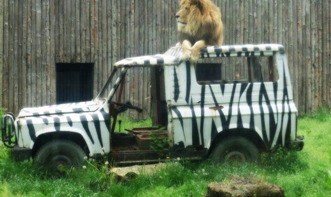 Sunt nehotarata daca imi place sau nu Zoo Baneasa