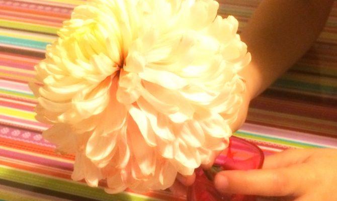 Viata de zi cu zi. Experiment 'Crizantema'